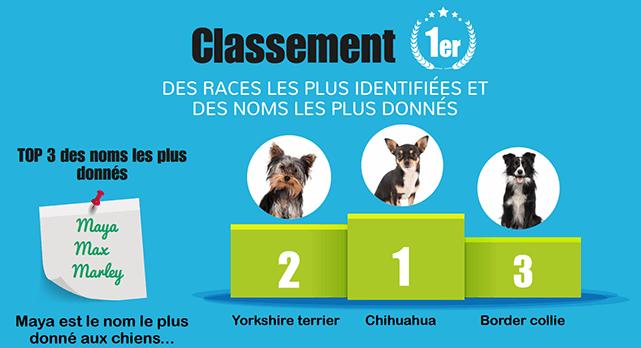 classement races chien identifiées