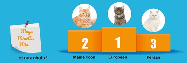 classement races chat identifiées