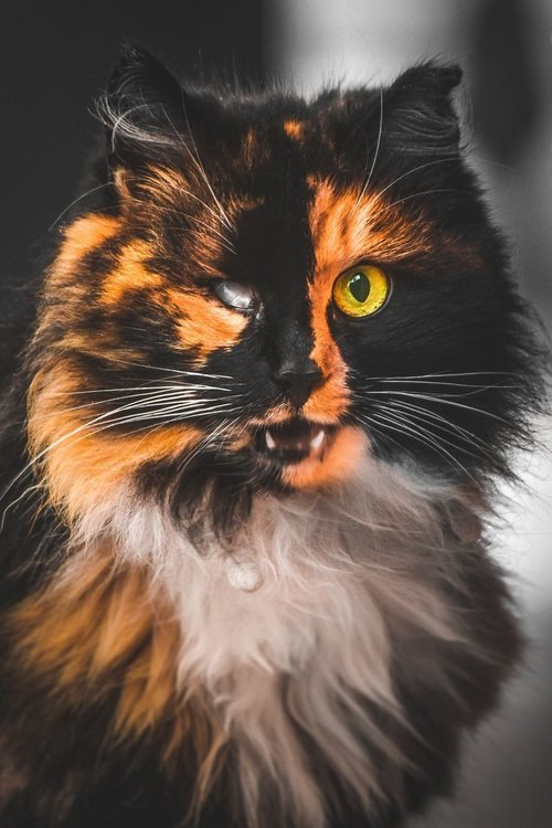 chats errants par Gabriel Khiterer