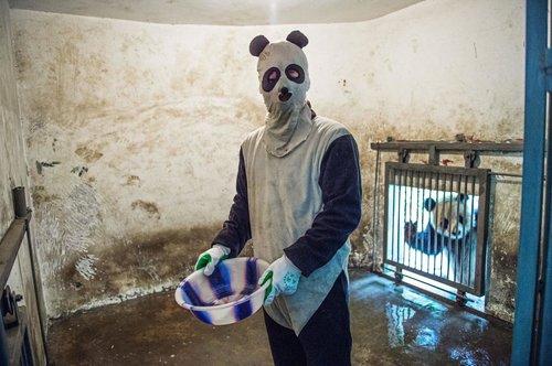 réserve de pandas géants en Chine