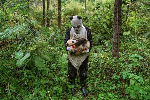 réserve des pandas géants, photographie Ami Vitale
