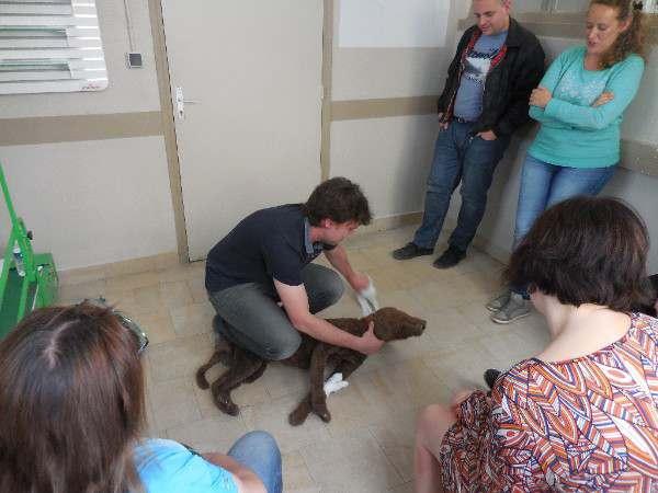 formation premiers secours chien