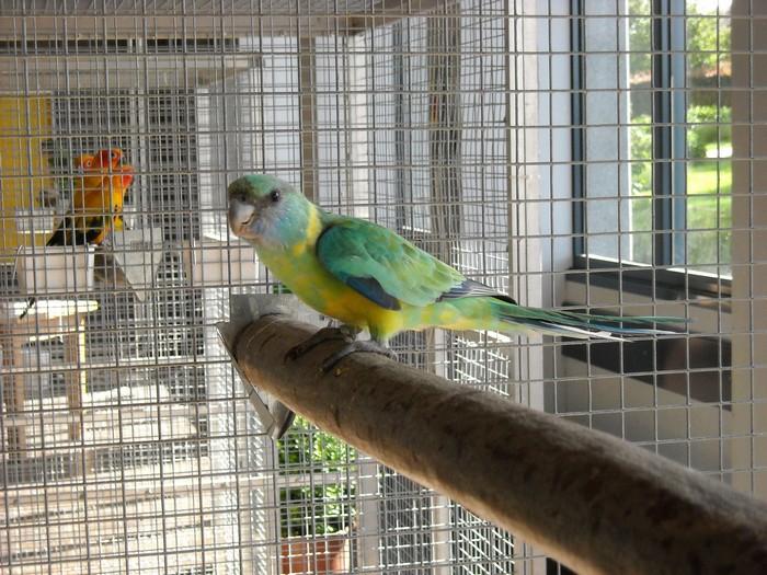 Nettoyager la cage de son oiseau
