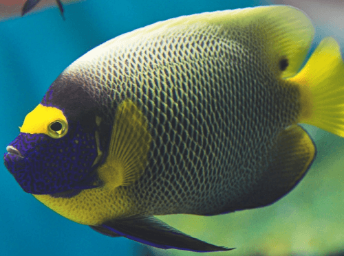 Les plus beaux poissons du monde for Poisson les plus cuisiner