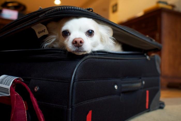 Prendre l'avion avec son chat ou son chien