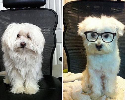 Chien qui porte des lunettes