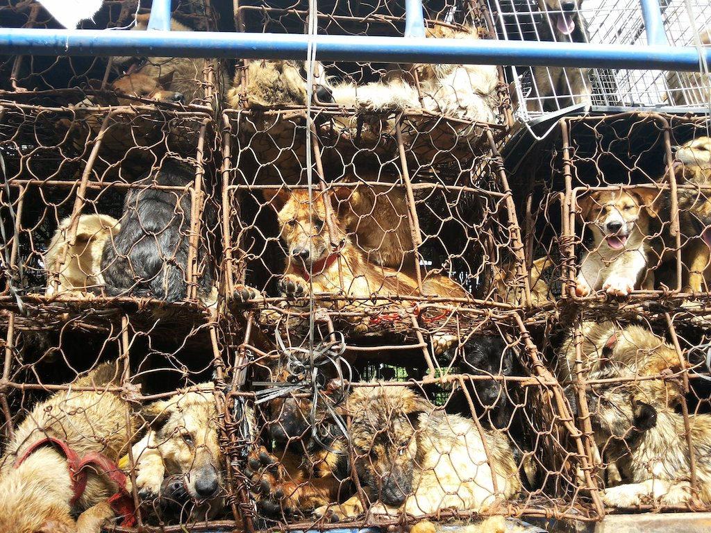 viande de chien en chine