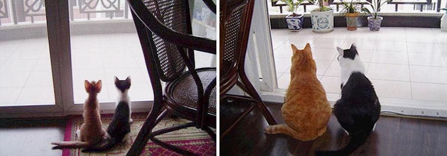 deux chats amis