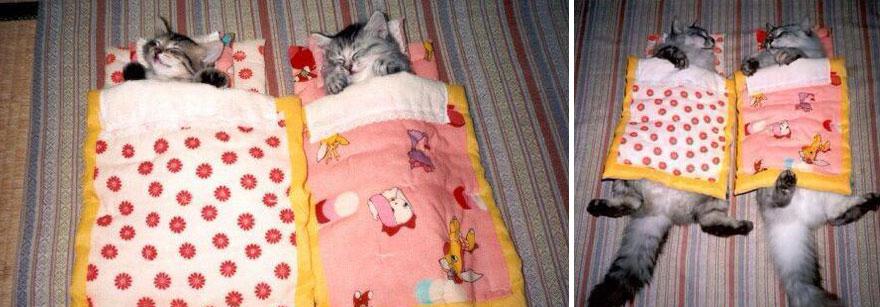 deux chats dorment ensemble