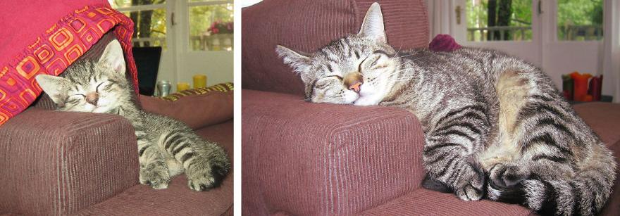 chatons sur un canapé