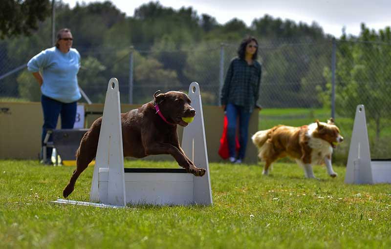 15 races de chiens les plus sportifs