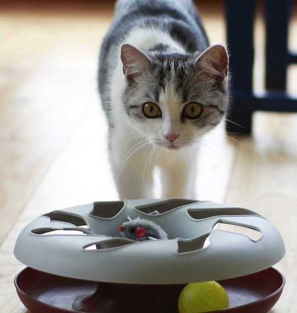 meilleurs jouets interactifs pour chats