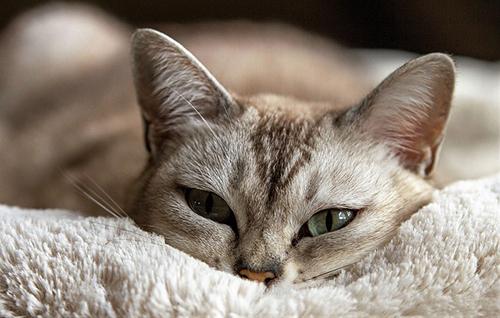 maitre de chat