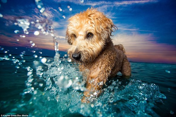 Kaylee Greer, photo concours Dog Photographer Of The Year