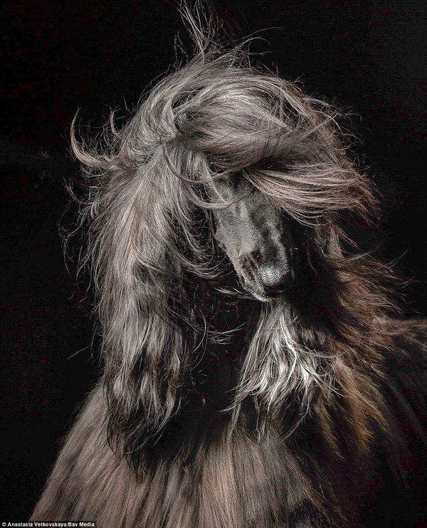 Anastasia Vetkovskaya, , photo concours Dog Photographer Of The Year