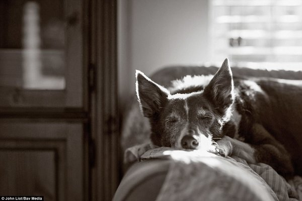 John Liot, photo concours Dog Photographer Of The Year