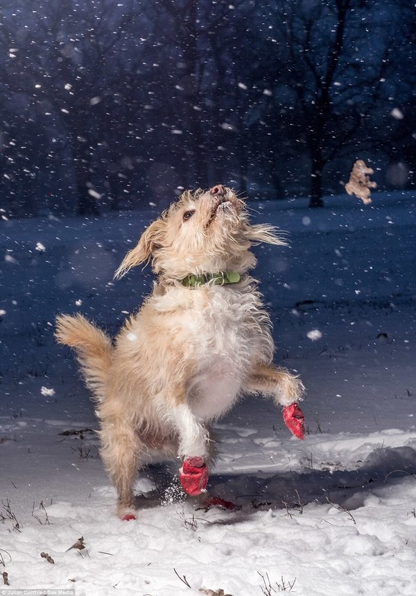 Martin Tosh, photo concours Dog Photographer Of The Year