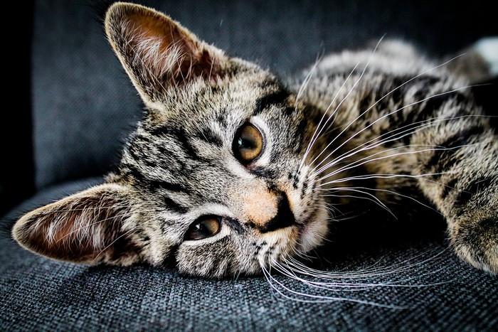 Quel est le prix pour faire stériliser son chat ?