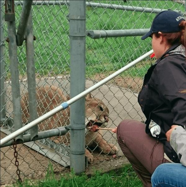 FormaZoo, formation personnalisée pour le personnel de parcs et institutions zoologiques
