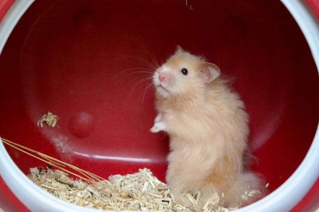 jouet pour hamster
