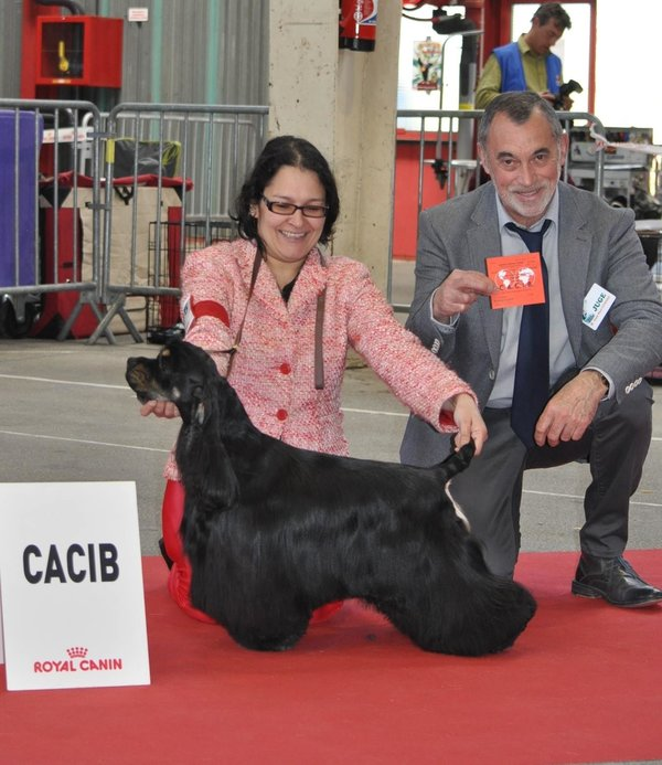 Tina de Hall of lords à l'Exposition Canine Internationale de Limoges