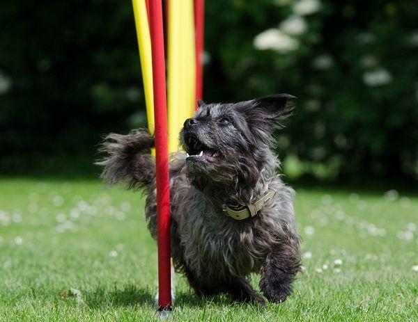 quel sport pratiquer avec son chien ?