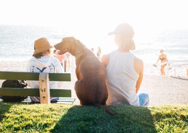comment nourrir son chien en vacances