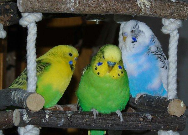 élevage oiseaux