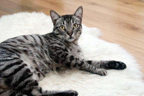 que faire si mon chat est maigre
