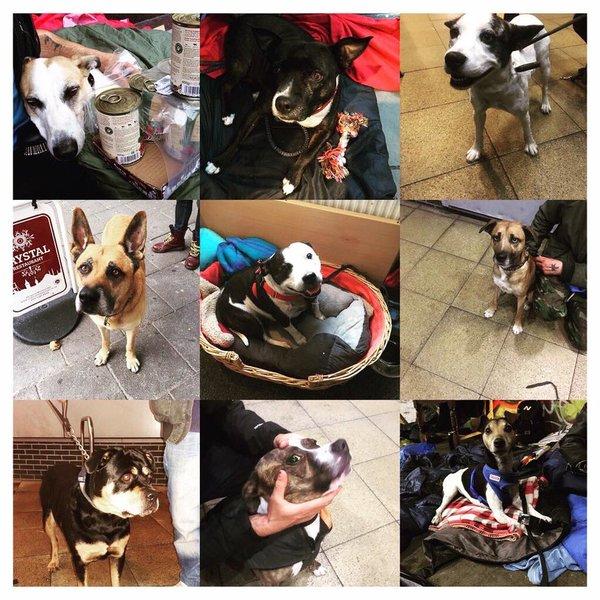 Les vétérinaires bénévoles de StreetVet