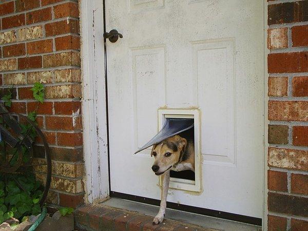 Tout Savoir Sur Les Chatières Ou Trappes De Porte Pour Chien - Porte pour chien