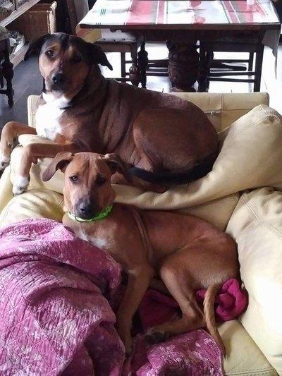 Karukera Animaux Solidarité, chien adopté