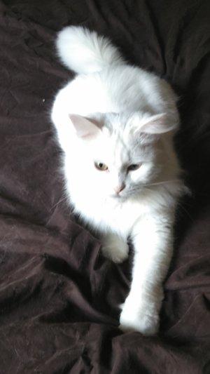 La Tanière des félins, histoire du chat adopté