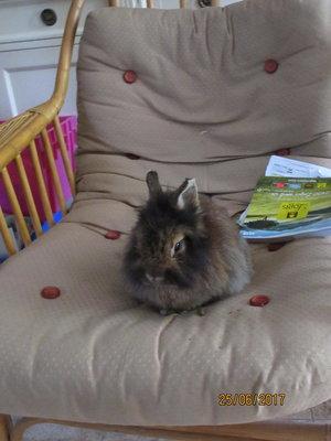 Enzo le lapin pose pour le livre