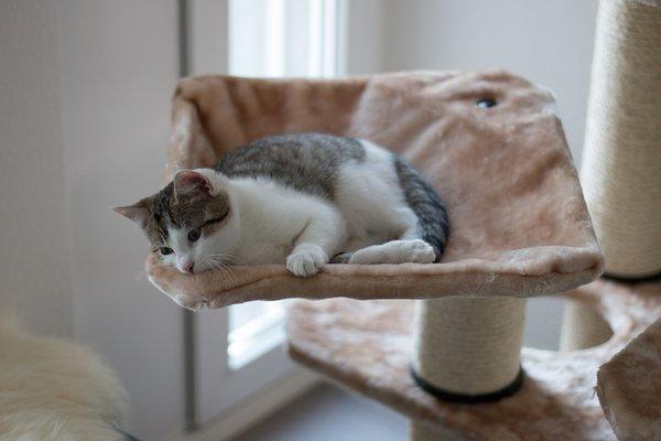 cadeau de Noël pour chat : arbre à chat