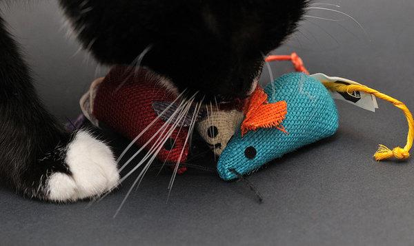 cadeaux de Noël pour chats