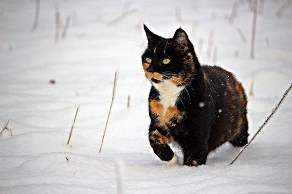 Protéger son chat du froid hivernal