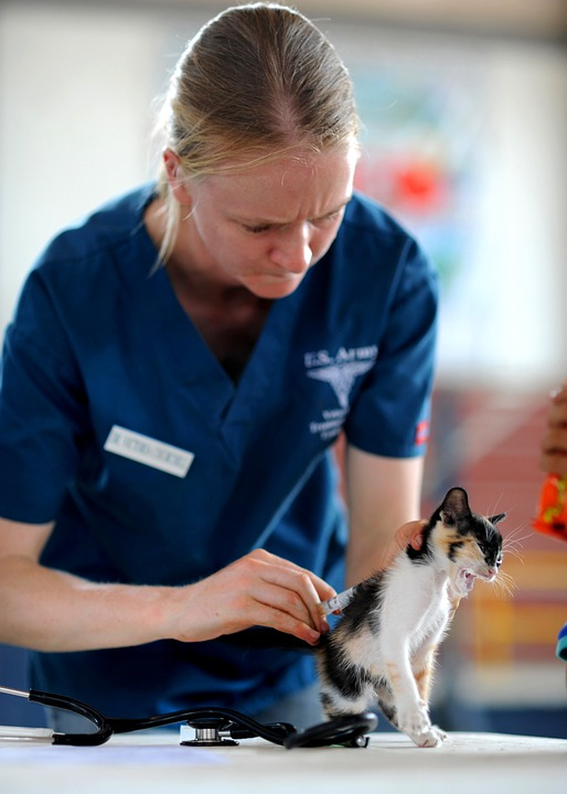 chat visite chez le vétérinaire