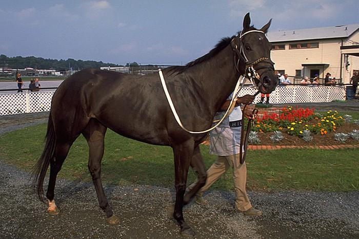 races de chevaux : pur-sang anglais