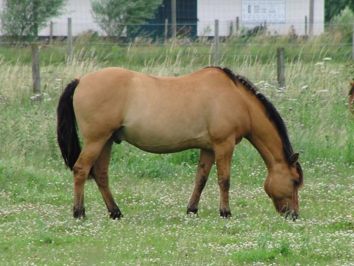 races de chevaux : Henson