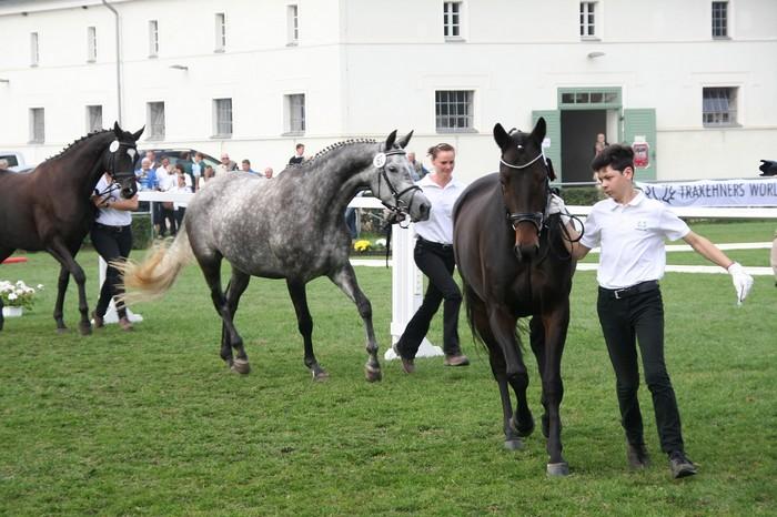 races de chevaux : Trakehner