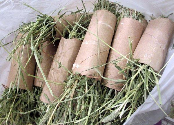 DIY pour lapin : rouleau de papier de toilette