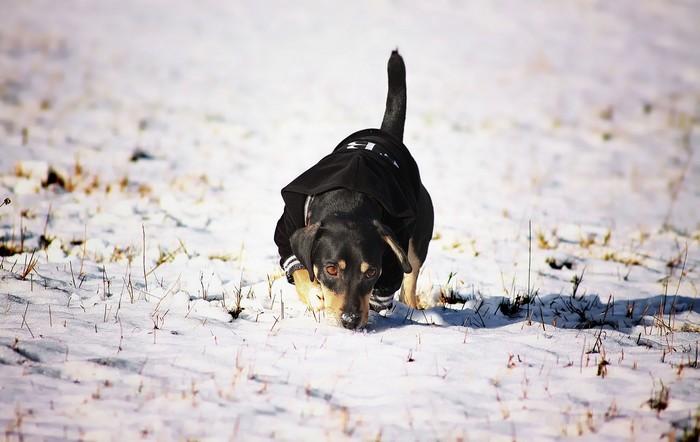 Protéger son chien du froid en hiver à la neige