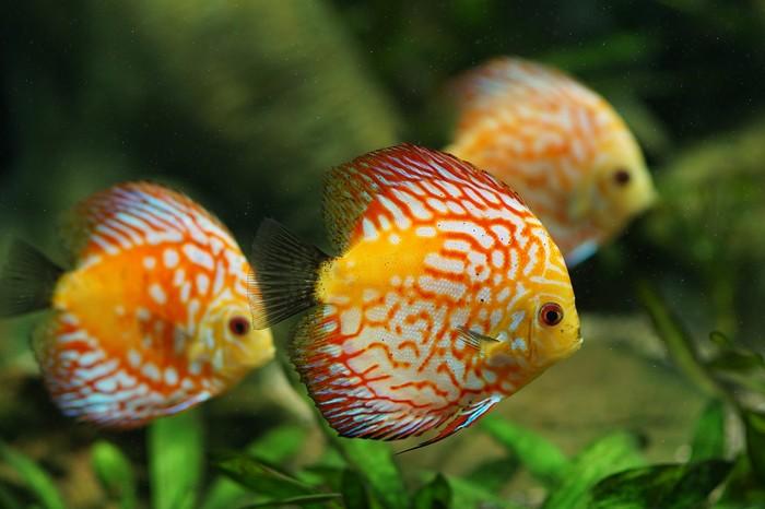 comment reconnaitre un poisson malade ?