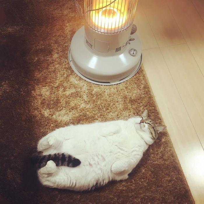 chat qui dort sur radiateur