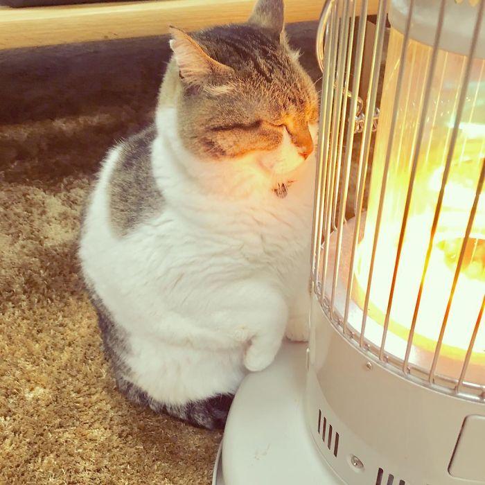 chat qui dort sur chauffage