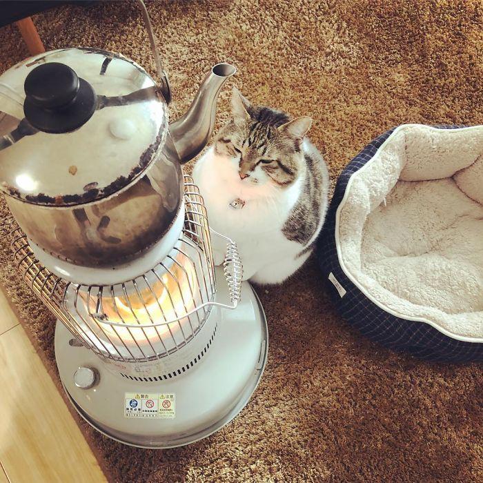 chat qui aime chauffage