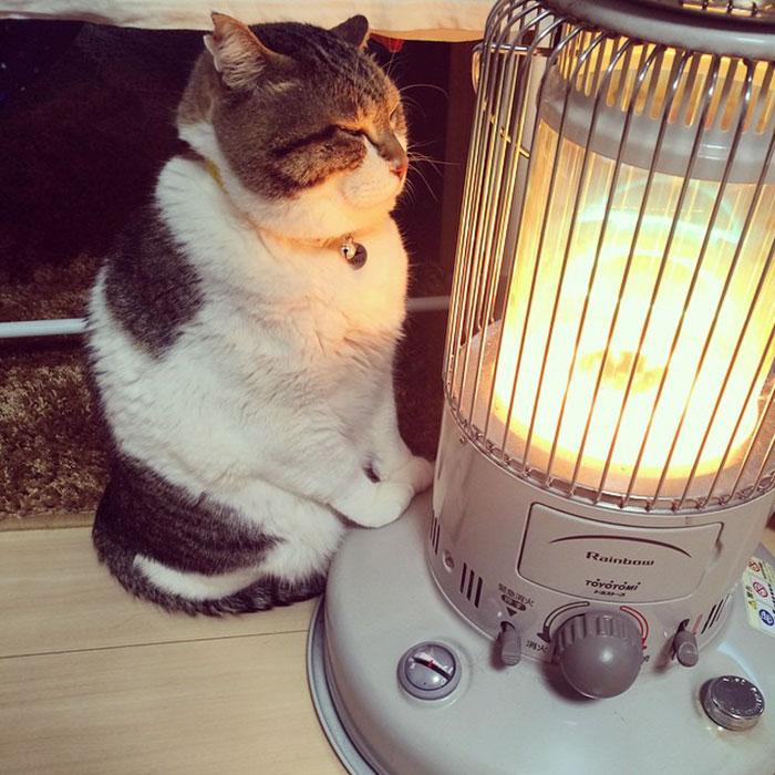 Mon chat est collé contre le chauffage