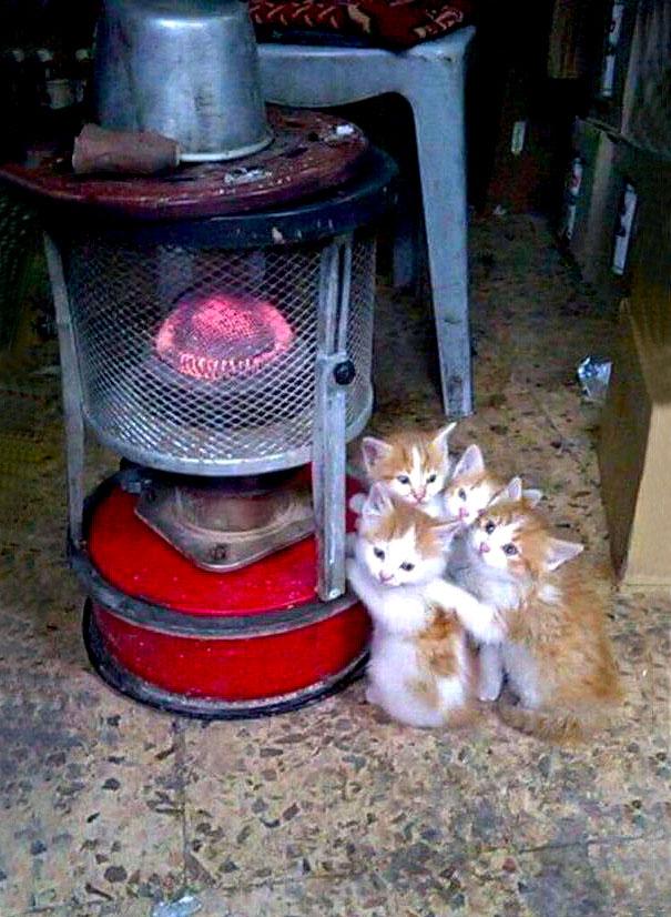 chat et radiateur