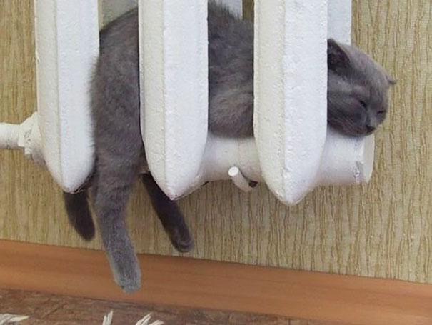 mon chat dort contre le chauffage